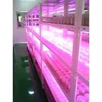 LED植物组培专用灯