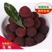 供应 靖州杨梅 湖南靖州乌梅肉多汁甜顺丰包邮