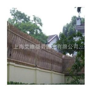 上海老洋房别墅墙篱笆竹篱笆竹围墙独特风景—常青藤&艾维福劳造