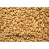 求购高粱糯米玉米碎米大米淀粉豆类小麦等原料