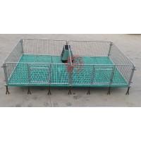 供应优质仔猪保育床自焊先进养猪设备小猪活动床
