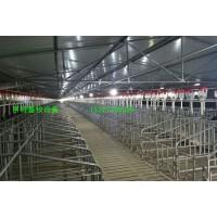 供应母猪栏定制育肥公猪限位栏厂家直销价格