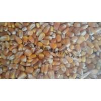 求购碎米玉米